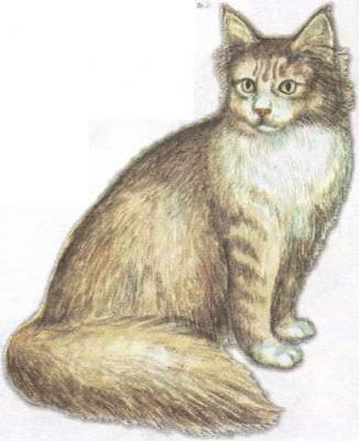 Click image for larger version  Name:cat.jpg Views:106 Size:19.6 KB ID:157