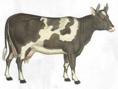 Click image for larger version  Name:cow.jpg Views:122 Size:47.1 KB ID:164