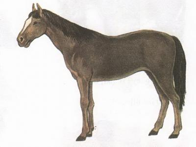 Click image for larger version  Name:horse.jpg Views:124 Size:32.7 KB ID:168