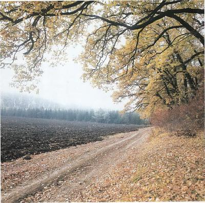 Click image for larger version  Name:Turkish forest.jpg Views:533 Size:72.8 KB ID:87