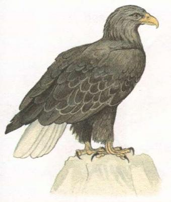 Click image for larger version  Name:eagle.jpg Views:36 Size:18.8 KB ID:214