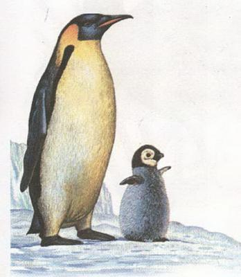 Click image for larger version  Name:penguin.jpg Views:41 Size:61.4 KB ID:223