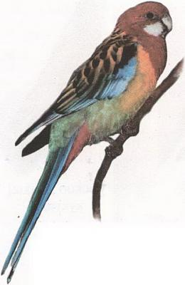 Click image for larger version  Name:parrot.jpg Views:40 Size:56.4 KB ID:226