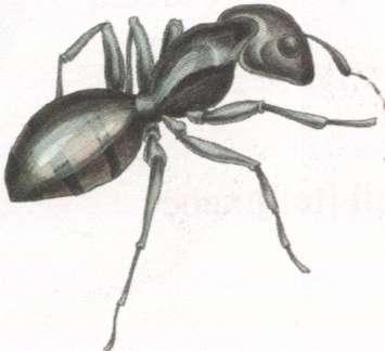 Name:  ant.jpg Views: 13 Size:  9.7 KB