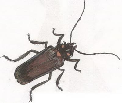 Click image for larger version  Name:beetle.jpg Views:40 Size:36.4 KB ID:230