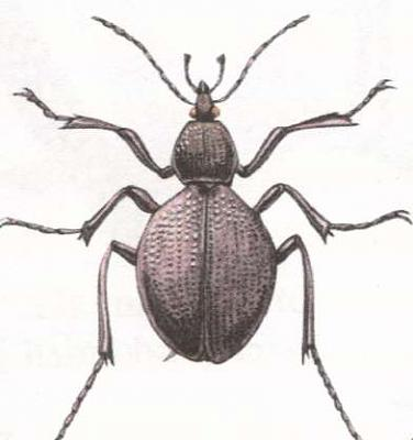 Click image for larger version  Name:bug.jpg Views:40 Size:13.7 KB ID:231