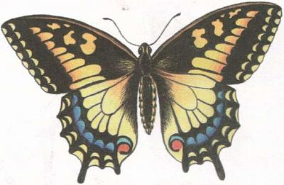 Click image for larger version  Name:butterfly.jpg Views:39 Size:25.7 KB ID:232