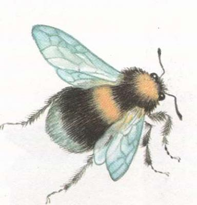 Click image for larger version  Name:bumble-bee.jpg Views:39 Size:14.0 KB ID:234