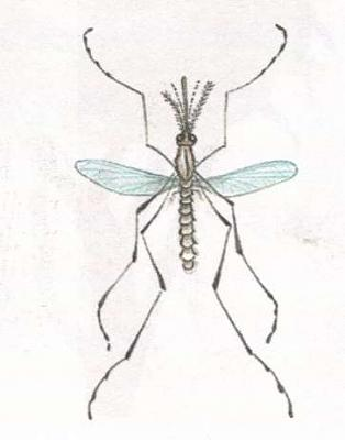 Click image for larger version  Name:mosquito.jpg Views:38 Size:11.5 KB ID:236