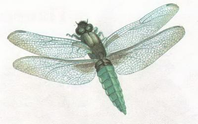 Click image for larger version  Name:dragonfly.jpg Views:34 Size:50.8 KB ID:238