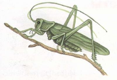 Click image for larger version  Name:grasshopper.jpg Views:43 Size:16.9 KB ID:239