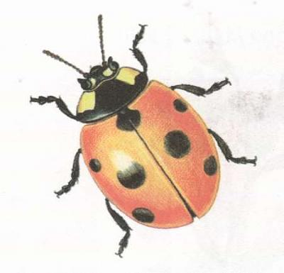 Click image for larger version  Name:ladybird.jpg Views:40 Size:14.6 KB ID:240