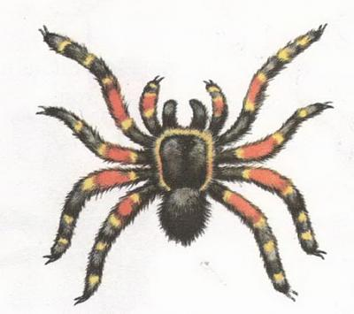 Click image for larger version  Name:spider.jpg Views:46 Size:50.9 KB ID:241