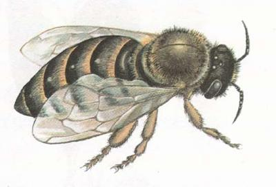 Click image for larger version  Name:wasp.jpg Views:41 Size:18.8 KB ID:242