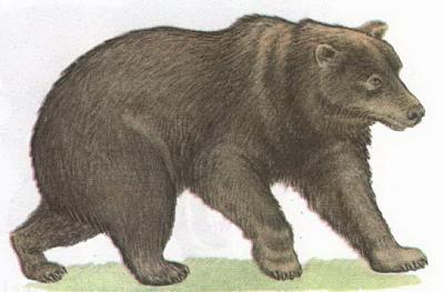 Click image for larger version  Name:bear.jpg Views:104 Size:63.2 KB ID:173