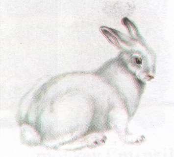 Name:  hare.jpg Views: 67 Size:  9.7 KB
