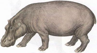 Click image for larger version  Name:hippo.jpg Views:98 Size:28.4 KB ID:190
