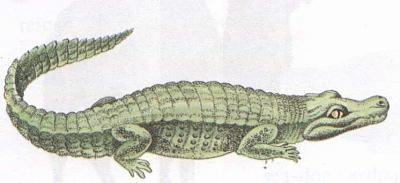 Click image for larger version  Name:crocodile.jpg Views:96 Size:25.0 KB ID:196