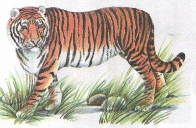 Click image for larger version  Name:tiger.jpg Views:93 Size:32.8 KB ID:200