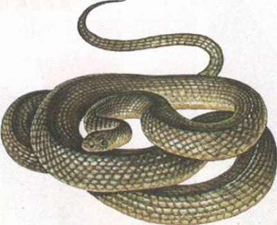 Click image for larger version  Name:snake.jpg Views:94 Size:19.9 KB ID:206