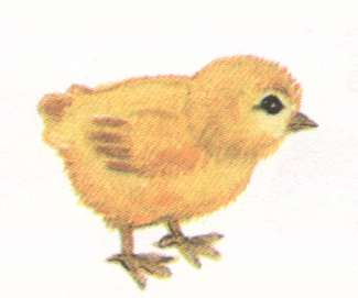 Name:  chicken.jpg Views: 58 Size:  6.6 KB