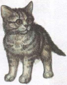 Name:  kitten.jpg Views: 36 Size:  11.2 KB