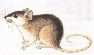 Click image for larger version  Name:mouse.jpg Views:115 Size:14.8 KB ID:160