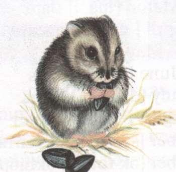 Name:  pet-hamster.jpg Views: 39 Size:  12.9 KB