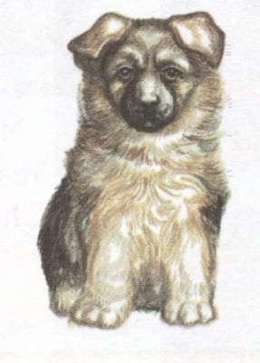 Name:  puppy.jpg Views: 36 Size:  12.4 KB