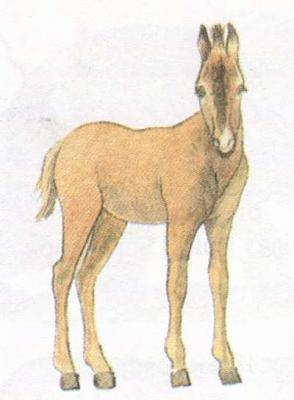 Click image for larger version  Name:foal.jpg Views:111 Size:17.4 KB ID:166