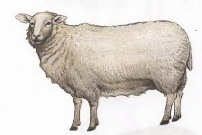 Click image for larger version  Name:sheep.jpg Views:123 Size:50.3 KB ID:172