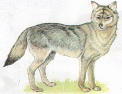 Click image for larger version  Name:wolf.jpg Views:87 Size:70.1 KB ID:180