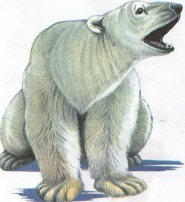 Click image for larger version  Name:polar bear.jpg Views:96 Size:69.0 KB ID:186