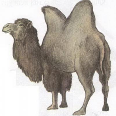 Click image for larger version  Name:camel.jpg Views:98 Size:55.9 KB ID:188