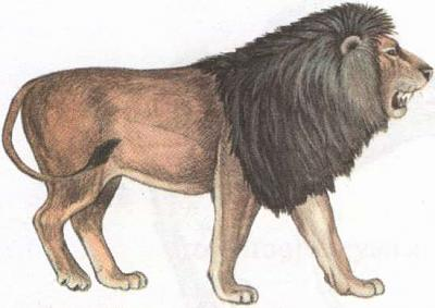 Click image for larger version  Name:lion.jpg Views:103 Size:22.0 KB ID:191