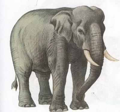 Click image for larger version  Name:elephant.jpg Views:83 Size:73.2 KB ID:193