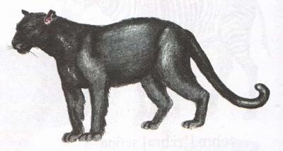 Click image for larger version  Name:panther.jpg Views:99 Size:21.8 KB ID:199