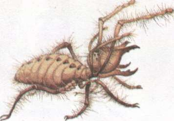 Name:  insect.jpg Views: 57 Size:  10.3 KB