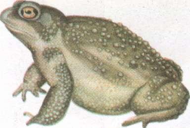 Name:  toad.jpg Views: 75 Size:  12.9 KB