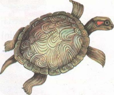 Click image for larger version  Name:tortoise.jpg Views:88 Size:19.3 KB ID:208