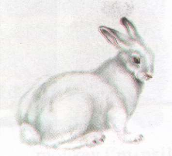Name:  hare.jpg