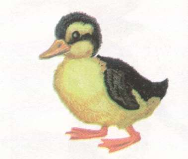 Name:  duckling.jpg