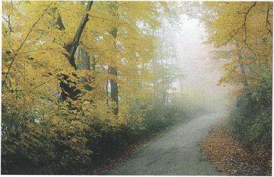Click image for larger version  Name:Mereneshtsky Forest.jpg Views:570 Size:75.7 KB ID:86