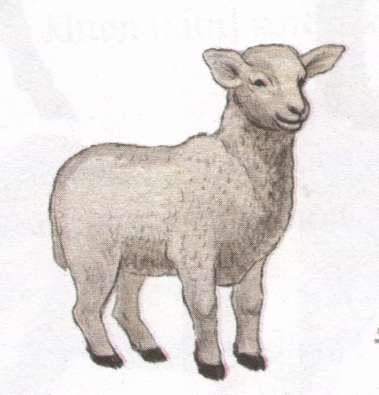Name:  lamb.jpg Views: 61 Size:  13.4 KB