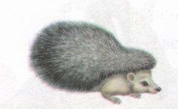 Name:  hedgehog.jpg Views: 67 Size:  7.8 KB