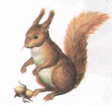 Name:  squirrel.jpg Views: 76 Size:  11.3 KB